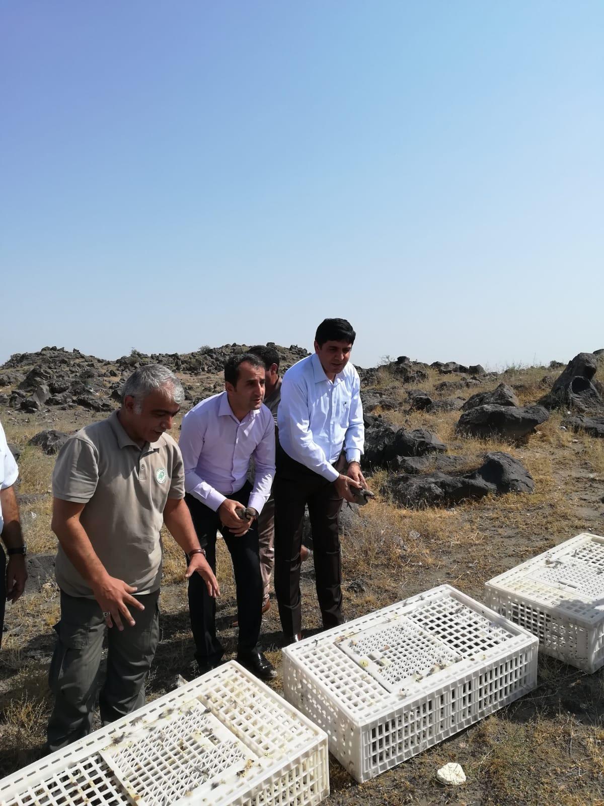 Rektör Alma'nın Katılımıyla 1000 Adet Keklik Doğaya Bırakıldı