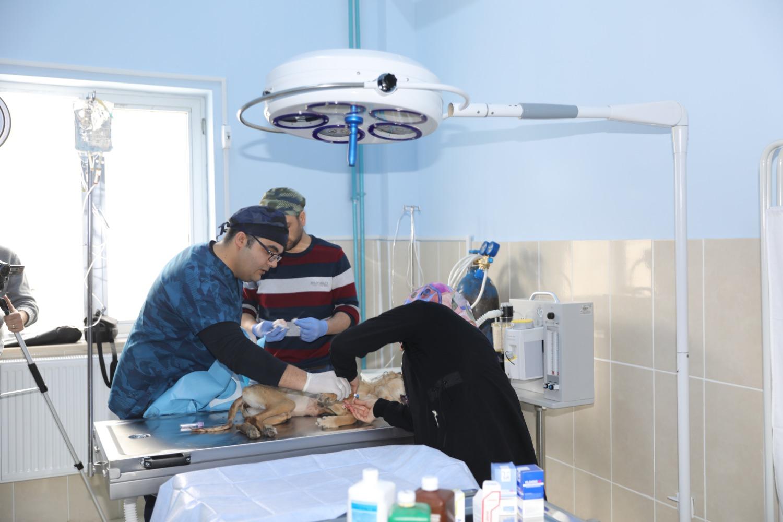 Iğdır Üniversitesi Hayvan Hastanesinde İlk Cerrahi Operasyon Gerçekleştirildi