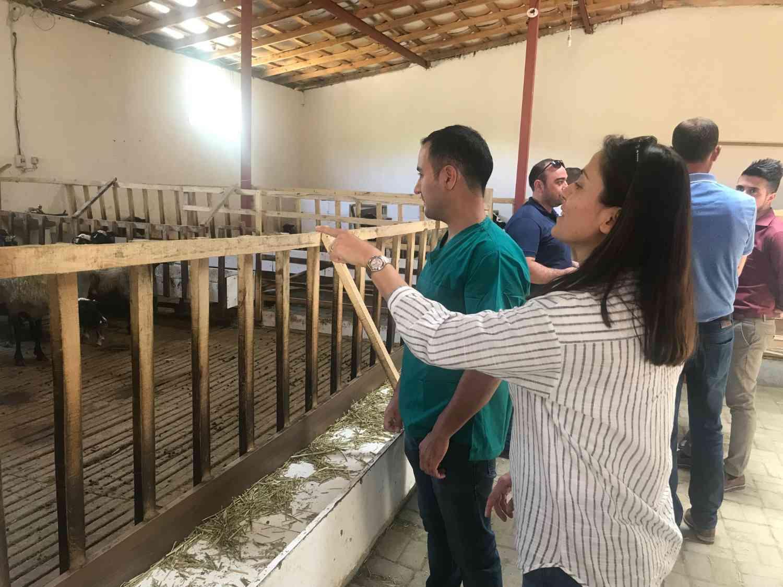 Veteriner Hekimlerimizden Koyun Çiftliğine Ziyaret
