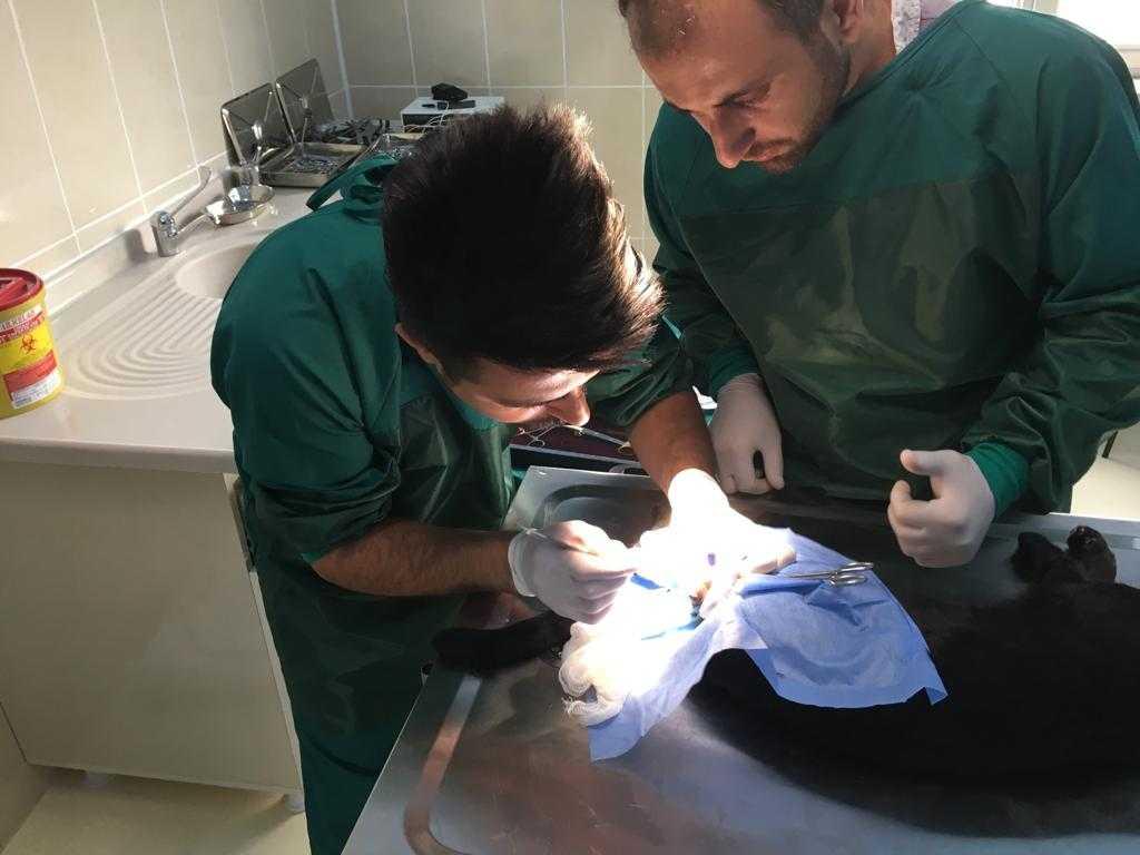 Hayvan Hastanemizde Cerrahi Operasyonlar Tüm Hızıyla Devam Ediyor