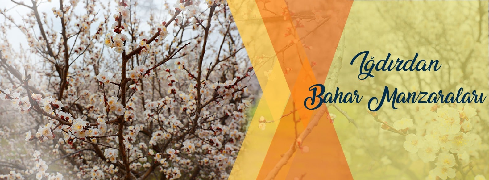 bahar-banner-01.jpg
