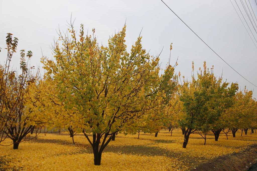 Iğdır'da sonbahar