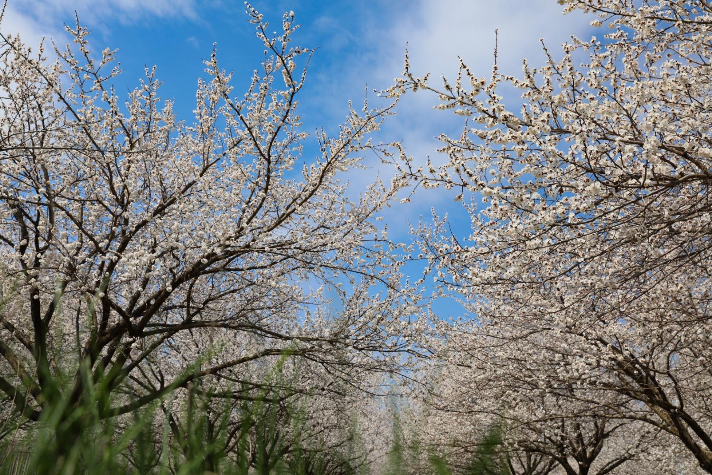 Iğdır'dan Bahar Manzaraları