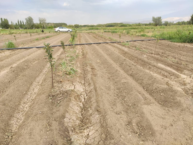 TUAM Melekli İstasyonunda Dünya'da En fazla Rağbet Gören Elma Çeşitlerinden Deneme Bahçe Kuruldu